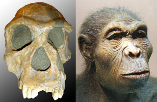 Evolution is a Lie - Intelligent Design is the Truth! The-homo-habilis