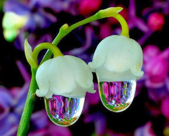 Magično cveće! Untitledattachment00079