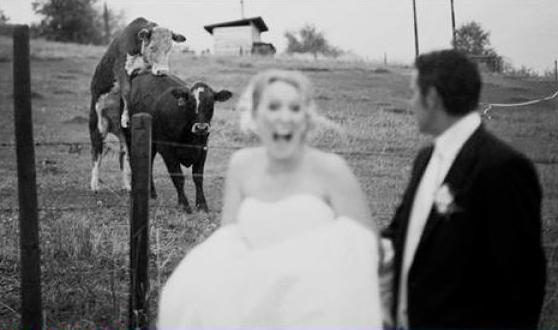 Svadbe ..dobre , smešne , katastrofalne.. - Page 2 WeddingsvsvsCapture