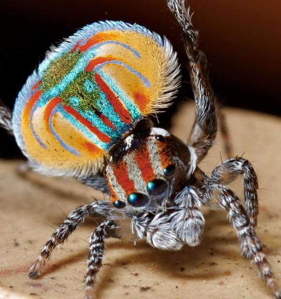 اجمل عنكبوت فى العالم Image010-580x616