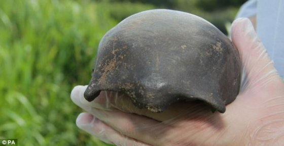 5,000-year-old extremely well-preserved underwater skull baffles archaeologists  Underwaterskull3