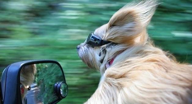 Mõista-mõista, mis muster see on? kuni 13. aprill (võitja on Elje Tamlak) Dog-fast-car-goggles