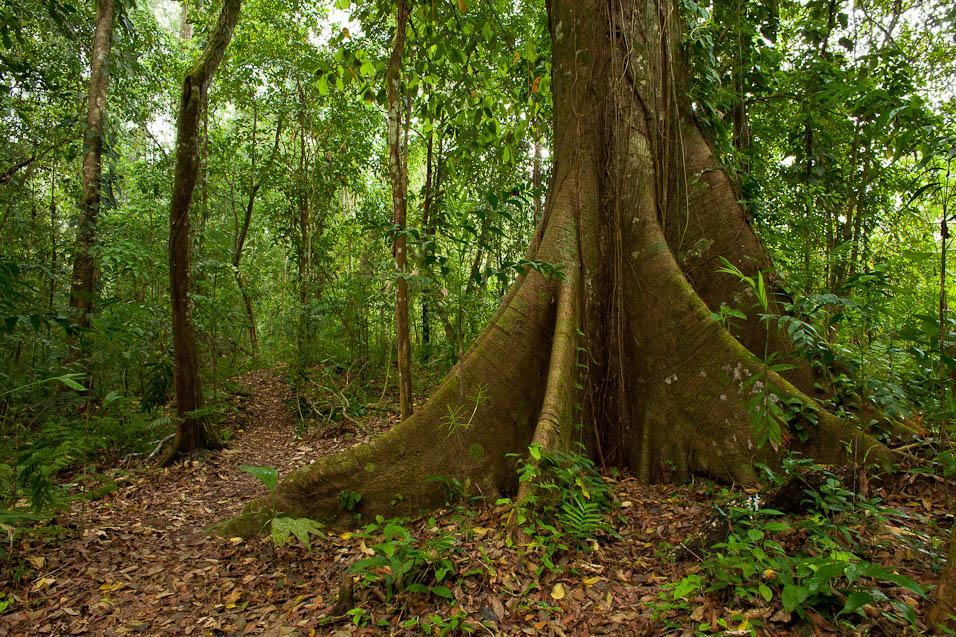 Nuevo Proyecto: Terrarios de Bosque.  CXhiapas_selva_Lacandona_32