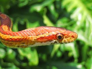 அண்ணனின் தயவால் ஆட்சி செய்யும்  தம்பி ...(விடுகதை) Snake018
