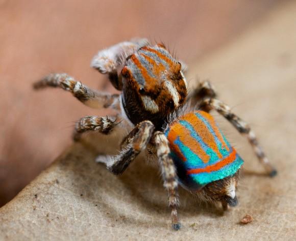 اجمل عنكبوت فى العالم Image041-580x474