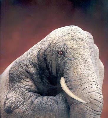 கையிலேயே எத்தனை எத்தனை கலைவண்ணம் ! Schroeders-elefante