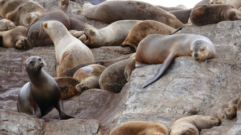 Adventure-Overland: Transafrica - Panamericana and next? Ushuaia-beagle-boottrip-2