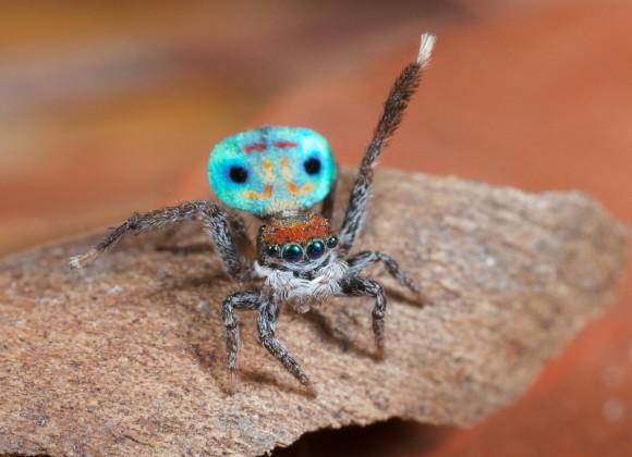 اجمل عنكبوت فى العالم Image026-580x420