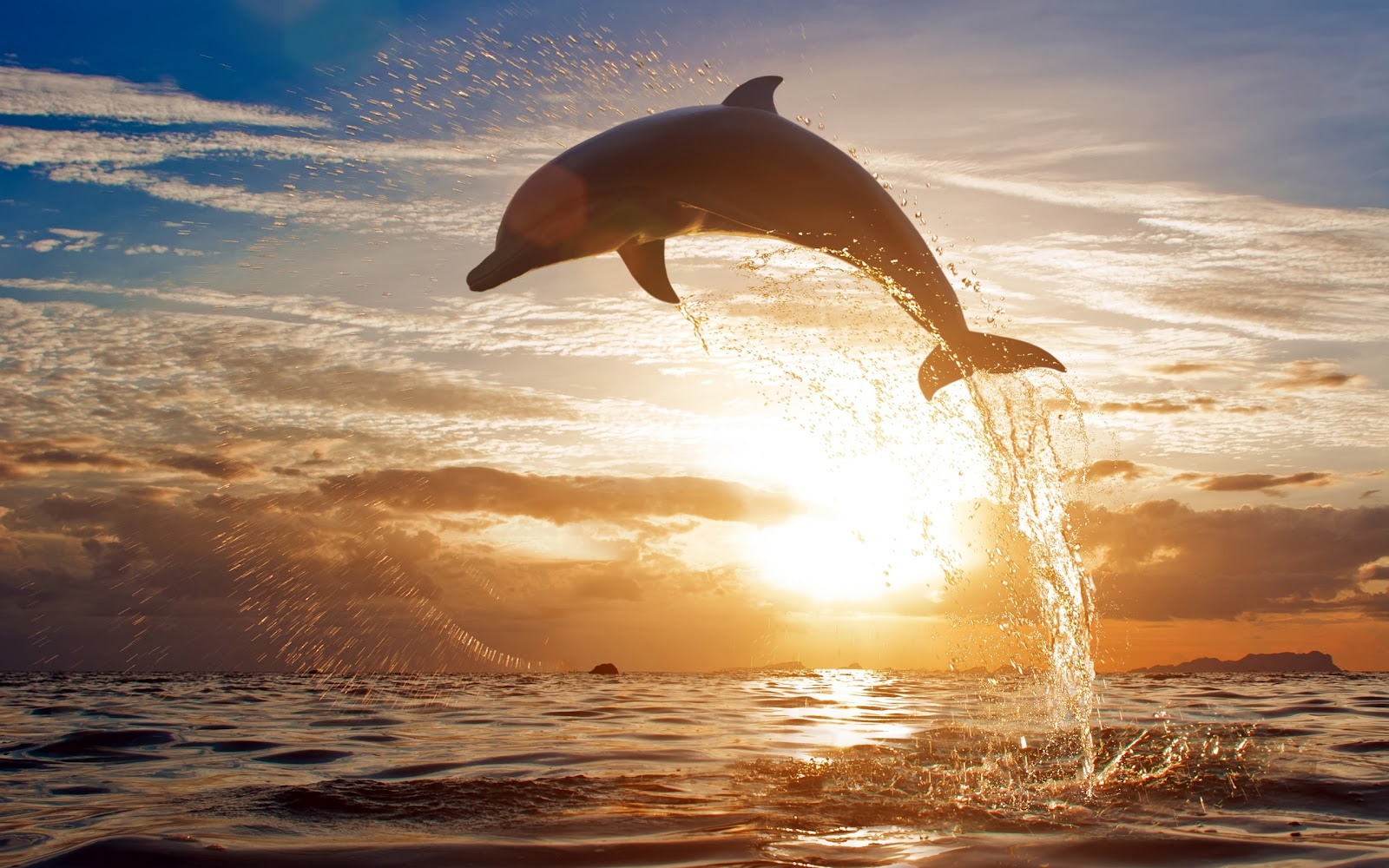 Bienvenidos al nuevo foro de apoyo a Noe #262 / 30.05.15 ~ 02.06.15 - Página 38 Delfin-saltando-en-el-mar-fondos-gratis-para-pc-laptop-y-tablet-imagenes-bonitas-2