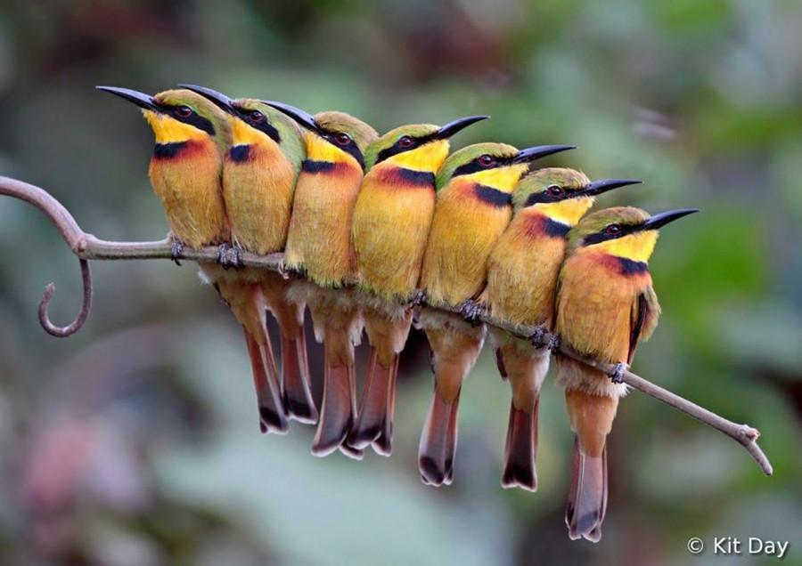 اجمل صور الطيور ل 2012 0_8928d_875b5969_orig