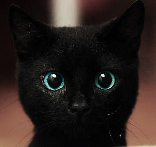 gatto nero 13