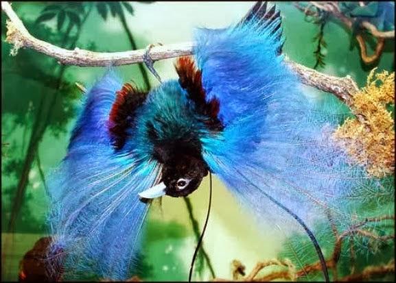 طائر الجنة الغريب والرائع 7