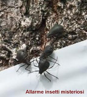 allarme insetti 305864_10201145399585286_1157141457_n