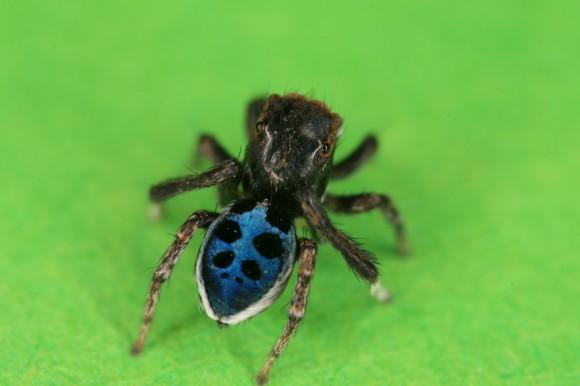 اجمل عنكبوت فى العالم Image054-580x386