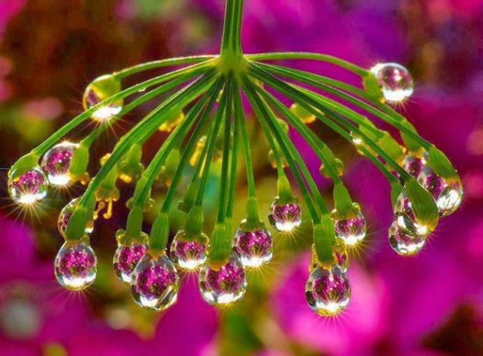 Magično cveće! Untitledattachment00097