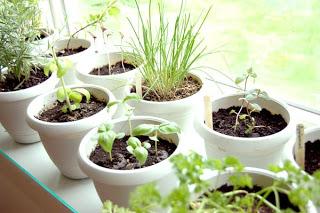 عمل حديقه اعشاب بالمطبخ بنفسك Indoor-herb-garden-1
