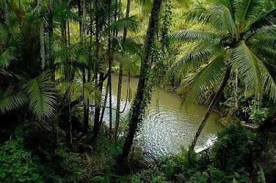 مناظر روعه في البرازيل Jungle