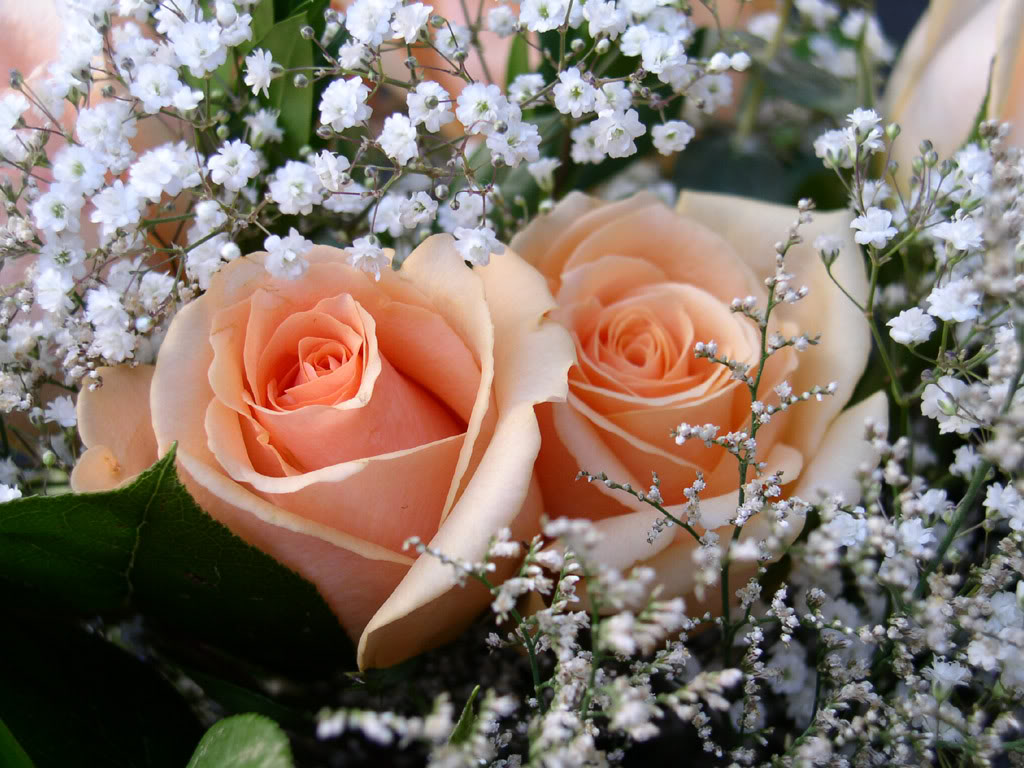 BUSQUEMOS HERMOSAS FLORES - Página 6 Rosas%2Bpara%2Bo%2BMoa