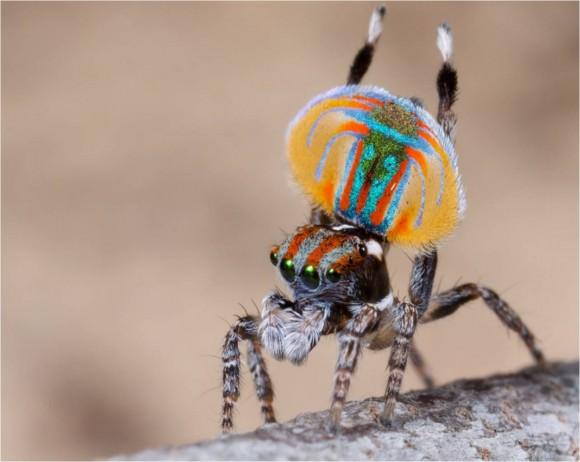 اجمل عنكبوت فى العالم Image007-580x462