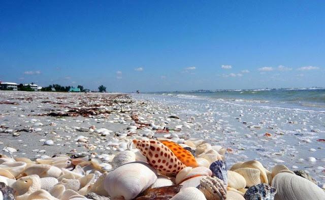 4 شواطئ صدفية مذهلة حول العالم Sanibel-shell-0%5B6%5D