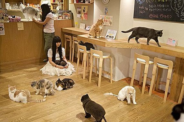 Le Neko Café Tokyo%2Bshinjuku