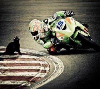 La moto suit le regard ... 377246_10150382917729053_620724052_8337242_1561897885_n