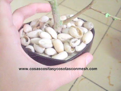 Bonito bonsai para el hogar Capa12