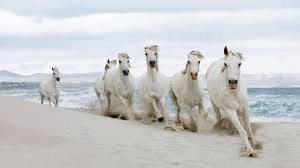 அறவொளி கவிதைகள் - வழிப்பறி கொள்ளை Horse