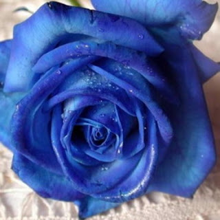 mots - Mots bleus... Mod_article3312587_1