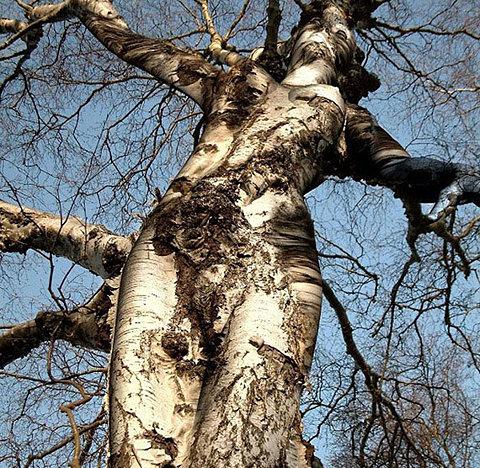 Images légendées - Page 5 Femme-arbre2