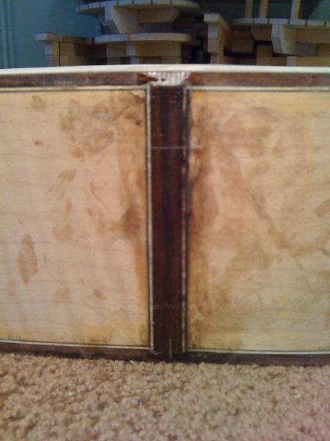VIDÉO EN LIGNE: OM Englemann/érable ondé à grande feuille - Page 2 IMG_1451