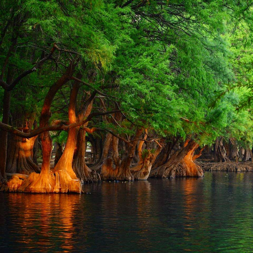 )))El color de la Naturaleza((( Cam%C3%A9cuaro%2BTanganc%C3%ADcuaro%2BMichoac%C3%A1n%2B25%2B(Sergio%2BAlfaro)