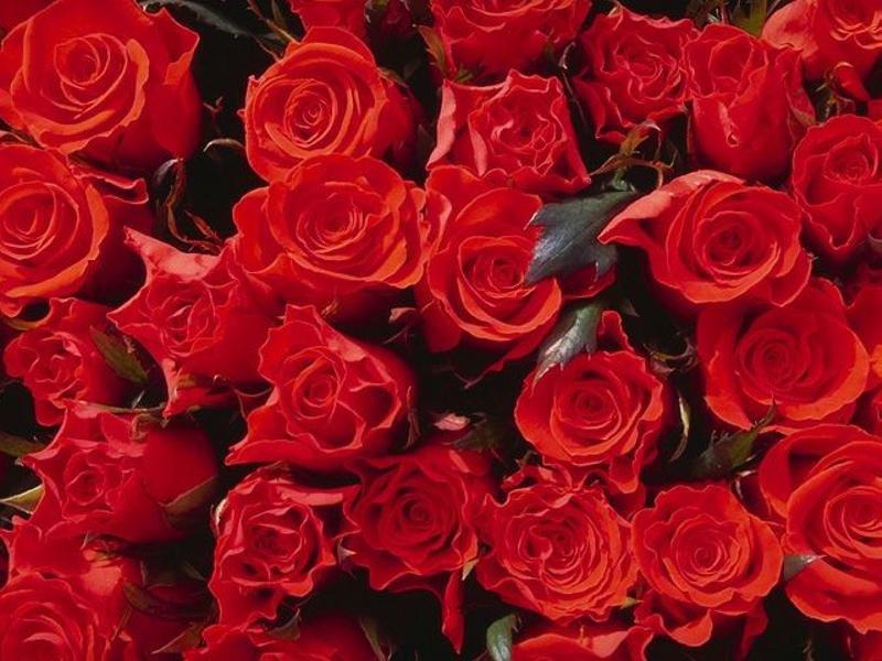 BAILE DE ROSAS Rosas
