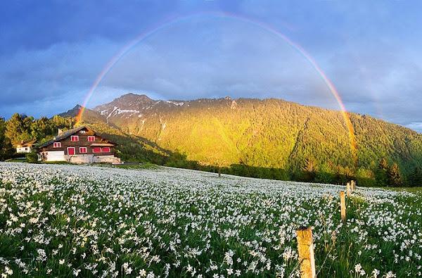 Bienvenidos al nuevo foro de apoyo a Noe #250 / 28.04.15 ~ 30.04.15 - Página 4 Paisaje-con-flores-y-arco-iris