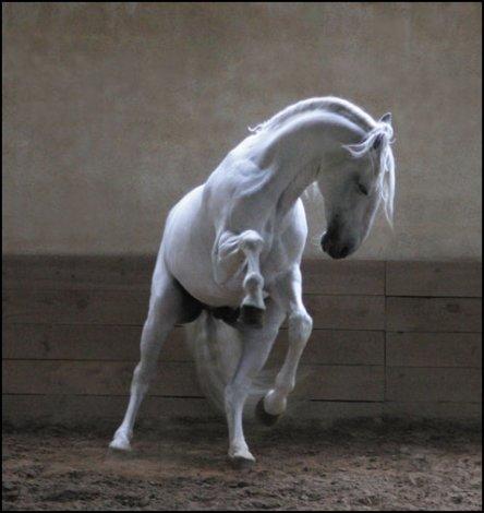 les chevaux.. - Page 2 2899253687_1_5_fS4WWAKq