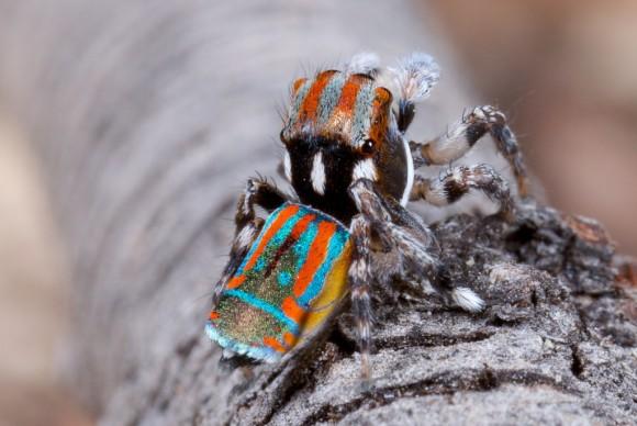 اجمل عنكبوت فى العالم Image0051-580x388