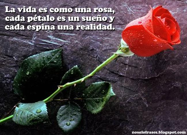 La vida sólo es una... Rosa