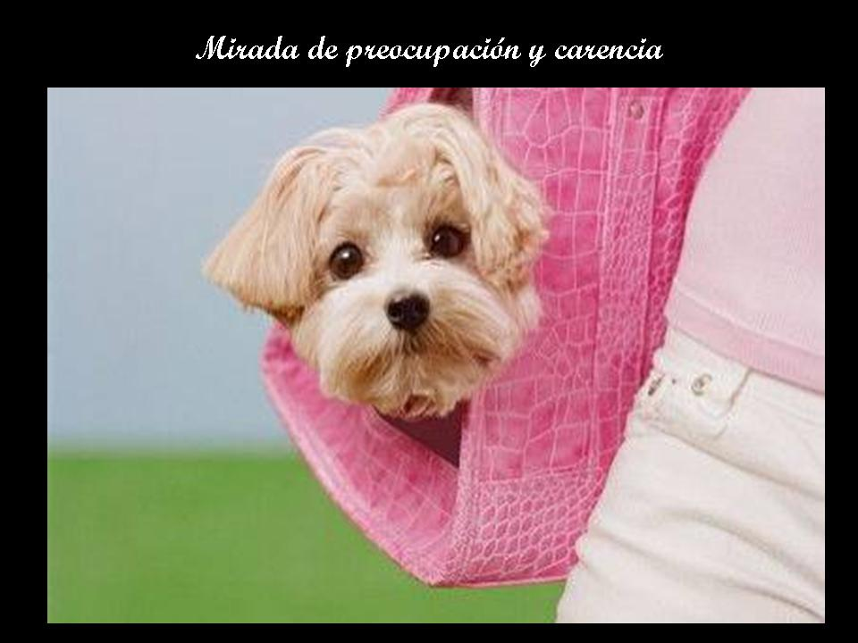 ****ANGELES DE 4 PATAS**** Diapositiva19