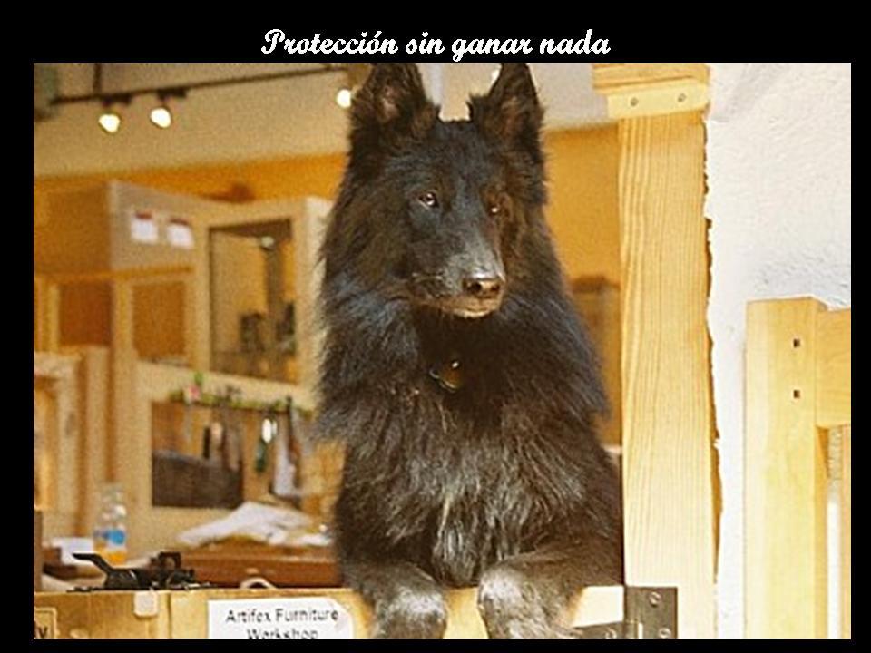****ANGELES DE 4 PATAS**** Diapositiva8