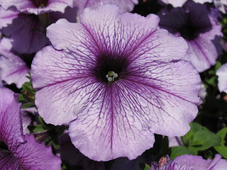 flowers 42