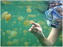 Medusas de agua dulce Jellyfishlake