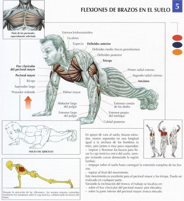Ejercitarse en casa 5-flexiones-brazos-suelo