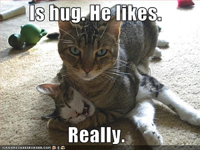 The scariest myth ever Funny-pictures-cat-gives-hug