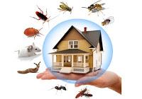 Bug Ezz Pest Resources