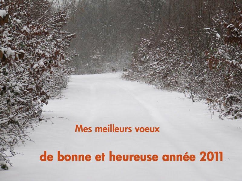 Nouvelle année Voeux2011
