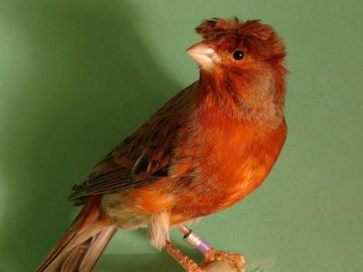 Les oiseaux : la passion de Marylou - Page 27 Pfreixo1