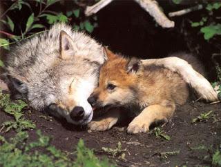افترااااااس ... Puppysnuggle-small