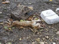 Gatos:han matado a 9, varios heridos, JAEN IMGP2369