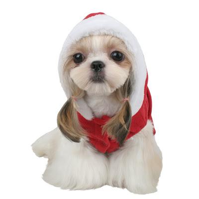 De parte de Administración y Moderación para La Mazmorra Disfraz_para_perro_navidad_papa_noel_santa_claus_1