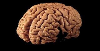 மூளை சொல்ல நாம் செய்து கொண்டிருக்கும் வேலைகள்! Brain-machine-interface-spratley